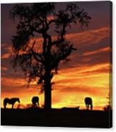 Southwestern Sunrise Color, Silhouetted Oak Tree And Three Horses Canvas Print