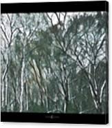 Southwind Woods Canvas Print