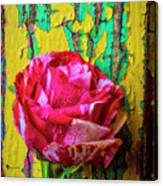 Soutime Rose Against Cracked Wall Canvas Print