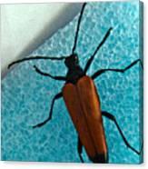 Space Age Beetle Canvas Print