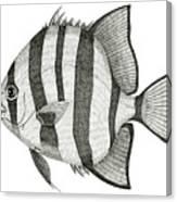 Spadefish Canvas Print
