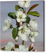 Spade's Apple Blossoms Canvas Print