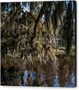 Spainsh Moss Hanging Over Pond On Middleton Place Canvas Print