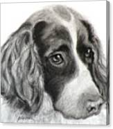 Spaniel Drawing Canvas Print