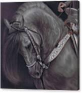 Spanish Horse Canvas Print