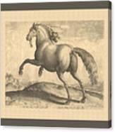 Spanish Horse Renaissance Engraving Canvas Print