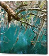 Spanish Moss And Emerald Green Water Canvas Print