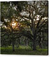 Spanish Moss During Sunset Canvas Print