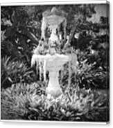 Spanish Moss Fountain With Bromeliads - Black And White Canvas Print
