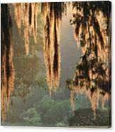 Spanish Moss In The Morning Canvas Print