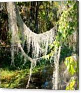 Spanish Moss Over The Swamp Canvas Print
