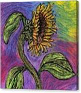 Spanish Sunflower Canvas Print