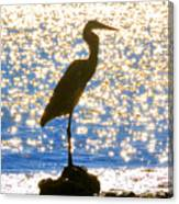 Sparkling Egret Canvas Print