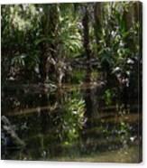 Sparkling Swamp Canvas Print