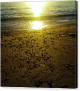 Sparkly Beach Sunset   Canvas Print