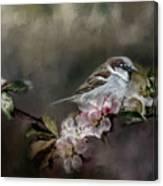 Sparrow In The Garden Canvas Print