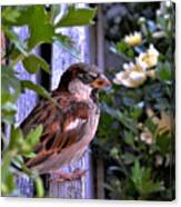 Sparrow In The Shrubs Canvas Print