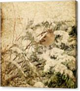 Sparrow In Winter I - Textured Canvas Print