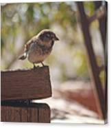 Sparrow. Canvas Print