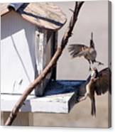 Sparrows In Fight Canvas Print