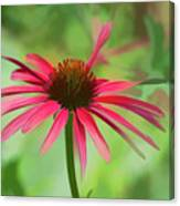Spash Of Red Canvas Print