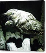 Special Bird Canvas Print