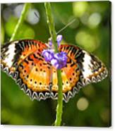 Speckled Butterfly Canvas Print