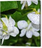 Speckled Flowers Canvas Print