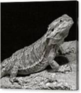 Speckled Iguana Lizard Canvas Print