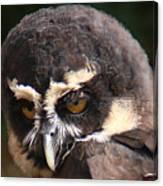 Spectacled Owl Portrait 2 Canvas Print