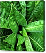 Spectacular Green Foliage Canvas Print