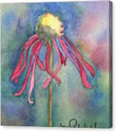 Spent Flower Canvas Print