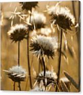 Spent Flowers In The Field Canvas Print