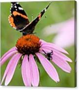 Spider And Butterfly On Cone Flower Canvas Print
