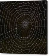 Spider Cobweb  Canvas Print
