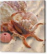 Spider Conch Shell On The Beach Canvas Print