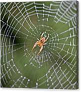 Spider In A Dew Covered Web Canvas Print