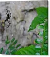 Spider In Thin Air Canvas Print
