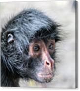 Spider Monkey Face Closeup Canvas Print