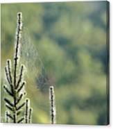 Spider Silk Canvas Print