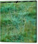 Spider Web In The Springtime Canvas Print