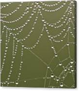 Spider Web With Water Droplets  Canvas Print