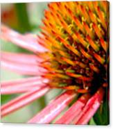 Spike On The Flower Canvas Print