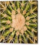 Spiny Cactus Needles Canvas Print