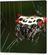 Spiny Orb Weaver Canvas Print