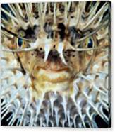 Spiny Puffer Canvas Print