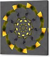 Spiraling Gerberas Canvas Print