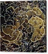 Spirals In Corals Canvas Print