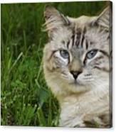 Spirit Cat Canvas Print