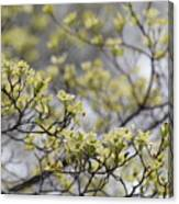 Spirit Of The Dogwood Canvas Print